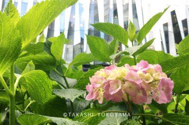 立亀薫展(ガラス絵) 銀座ゆう画廊