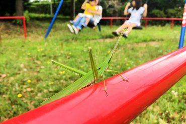 昆虫採集~お祭りが元気