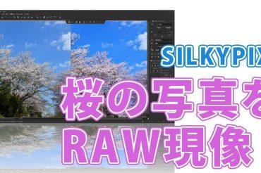 SILKYPIXで桜の写真をRAW現像【鮮やかに仕上げる】